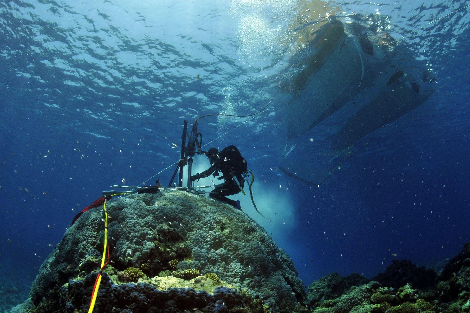 Messungen an von lebenden und fossilen Korallen lassen unter anderem Rückschlüsse zu über vergangene Temperatu-ren und Schwankungen des Meeresspiegels.  Bild: Eric Matson / Australian Institute for Marine Science