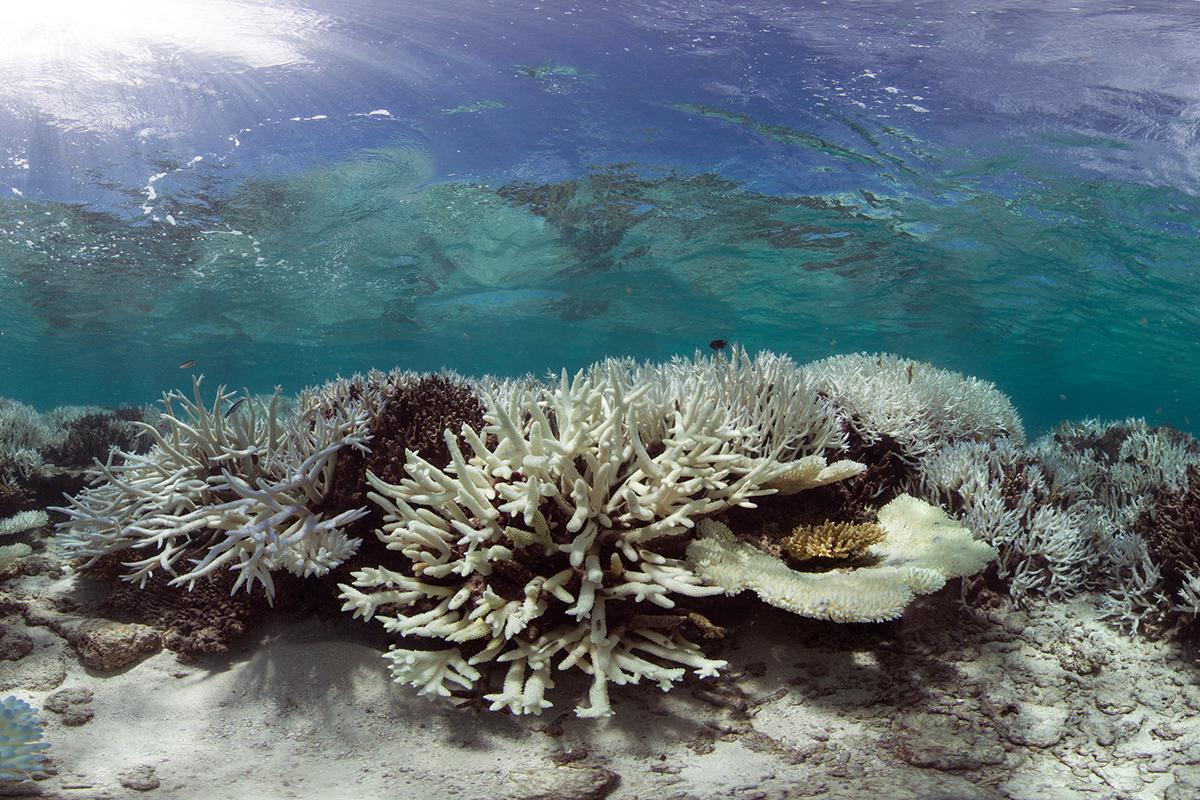 Korallenriff auf den Malediven nach der globalen Korallenbleiche 2016. Bild: The Ocean Agency / XL Catlin Seaview Survey.