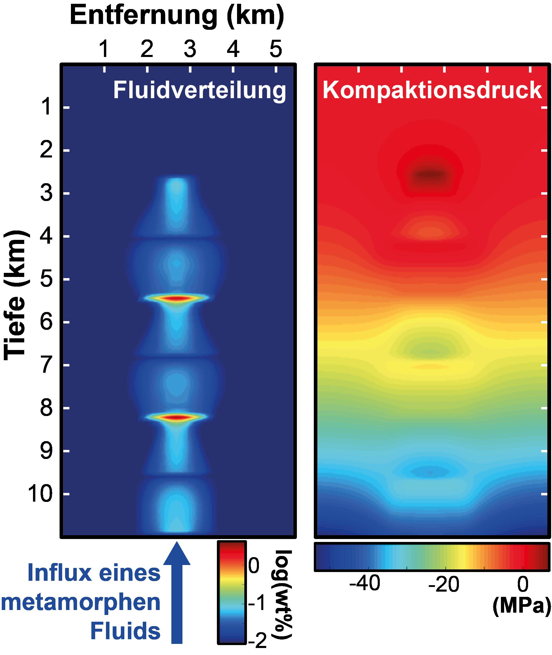 Beispiel einer numerischen Simulation des Fluidstroms in einem 2D-Krustenabschnitts aus Metasedimenten. Die Verteilung der Flüssigkeiten (links) und Fluidströmen wird durch den Kompaktionsdruck (rechts) der Gesteinsmatrix geregelt. Bild: © Pierre Lanari