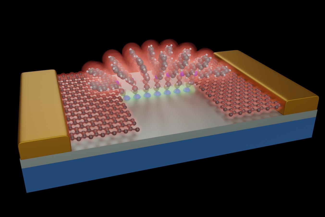 Schematische Darstellung von Molekülen, die auf einem Siliciumdioxid/Silicium-Substrat verankert sind (grau). Dank der kontrollierten Struktur der Moleküle bildet sich eine stabile molekulare Architektur, die als Brücke für die zwischen den Graphen-Elektroden (rot) wandernden Elektronen dient. Diese Graphenleitungen werden dann von herkömmlichen metallischen Gold-Pads (gelb) kontaktiert. Die so entstandene Molekularstruktur erinnert an die Architektur eines römischen Bogens. Bild: Empa